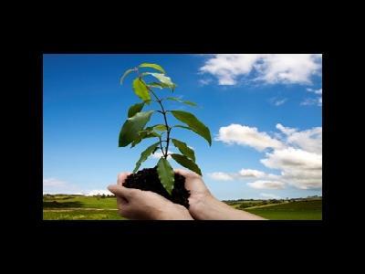 آیا درختان هم تسبیح خداوند می کنند؟
