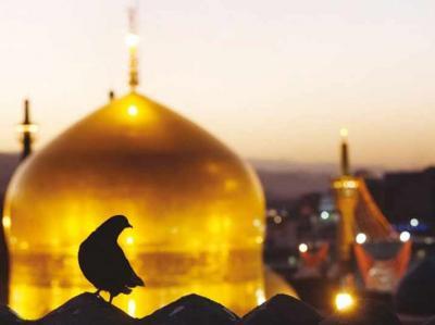 فیلم/ حضور زائران اهل سنت در حرم امام رضا(ع)